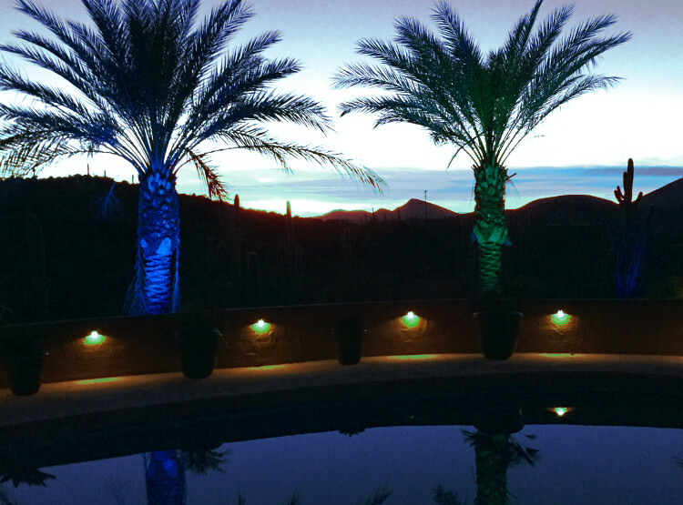 brilliance-chameleon-lights-palm-trees-750x555